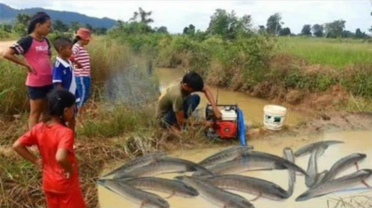 印度人捕鱼太暴力,直接抽干水来捡,断子绝孙式收成,太傻了!