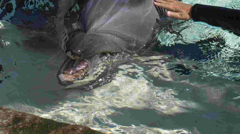 胆子真大!宝宝上去就是给海豚一巴掌,海豚的反应让所有人都屏住呼吸!